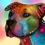 """pit bull"" by markashkenazi"