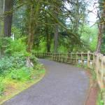 """Silver Creek Falls Path"" by vncstone"
