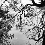 """""""Echo Bay, Sucia Island"""" by motleymenagerie"""