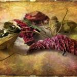 """""""Timeworn"""" by JessicaJenney"""