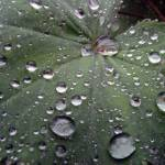 """Water Drops"" by ljpixie75"