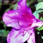 """BeFunky_flower PIC 1113"" by bigrock99"