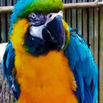 """""""Parrot Paco"""" by 1kelton"""