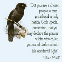 black bird scripture
