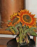 Sunflowers #2