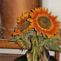 Sunflowers #2 Art Prints & Posters by Cindy Dooley