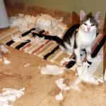 """Adopt my cat!"" by DarrinAldridge"