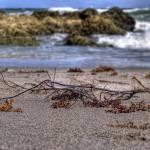 """Ocean treasures"" by xbeautifulcoma"