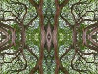 ABSTRACT TREE IMPRESSION, Number 4