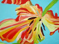 Fringed - detail, open tulip