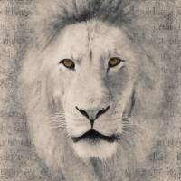 Bold as a Lion in Black and White Art Prints & Posters by Lori Lindsey