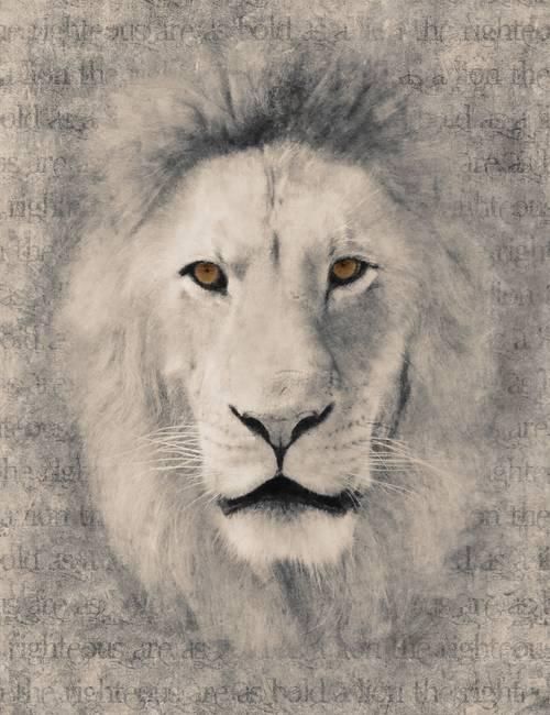 Stunning Black And White Lion Artwork For Sale On Fine