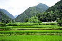 The Mountains And The Rice Fields of Sado