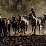 """""""Red Cliff Lodge Horses-4462"""" by pixelcene"""