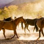 """""""Red Cliffs Horses-3768"""" by pixelcene"""