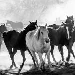 """""""Red Cliffs Lodge horses-4417"""" by pixelcene"""