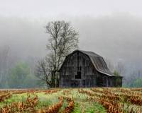 Foggy Barn-20X16