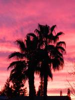 Bright Pink Sunset over Palms