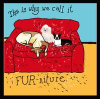 dogs and FURntiure