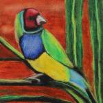 """Gouldian Finch"" by VisionaryPictures"