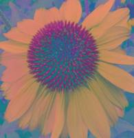 daisy 2 fade out