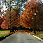 """Autumn Boulevard"" by christinawilliams"