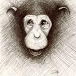 """Hello the Chimp"" by jenndelfs"