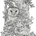 """touch up owl white background no date little darke"" by DonnaMariesArt"