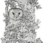 """touch up owl white background no date little darke"" by DonnaMariesArt"