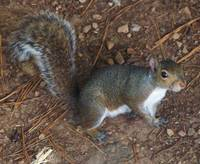 Grounded Squirrel 4