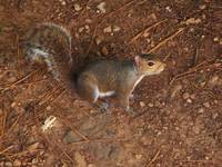 Grounded Squirrel 6