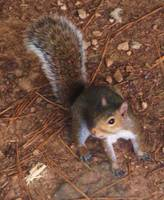 Grounded Squirrel 2