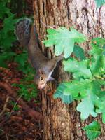 Squirrel In A Tree 3