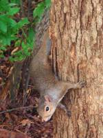 Squirrel In A Tree 6