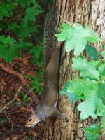 Squirrel In A Tree 4