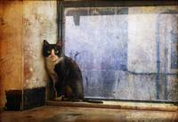 cat at window urban blues