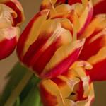 """""""Spring Indoors"""" by julieandel"""