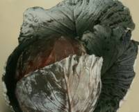 Unfolding Red Cabbage