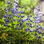 """Mountain Flowers"" by KjWorthing"