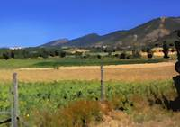 Summer in Umbria
