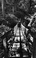 Footbridge into the Woods