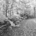 """Scenic Autumn Drive 3 B&W"" by TheNorthernTerritory"