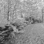 """Scenic Autumn Drive 3 B&W 2"" by TheNorthernTerritory"