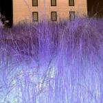 """house with purple grass"" by dietrich"