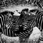"""Zebra splash"" by 12Steps"