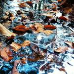 """fall leaves in a stream"" by dietrich"