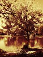 tree and lake contrast sepia