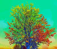 tree 2 colorful2