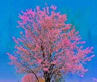 tree 2 pink and blue