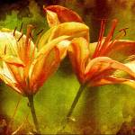 """twin lilies weathered vintage"" by lizmix"